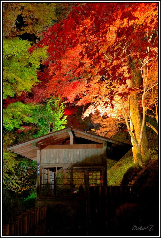 2014年11月23日大興善寺 (75)