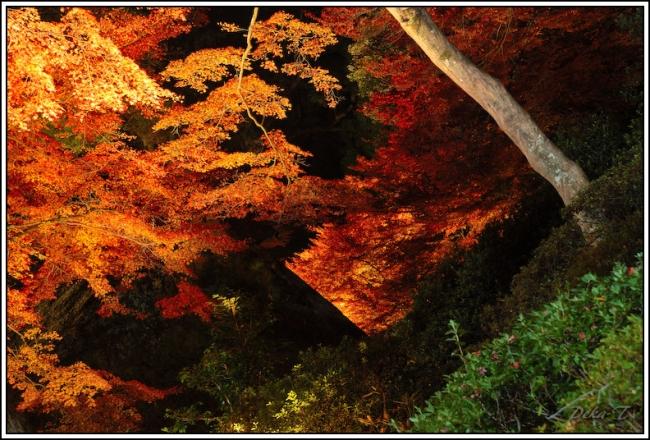 2014年11月23日大興善寺 (98)
