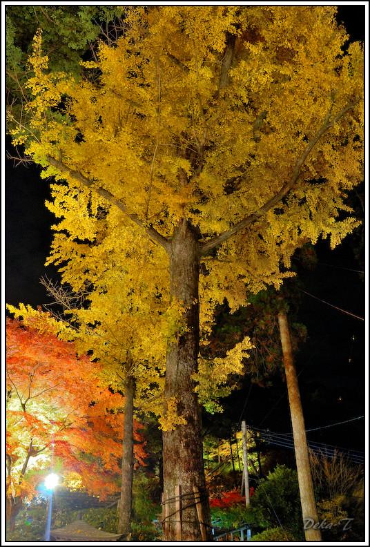 2014年11月23日大興善寺 (110)