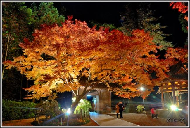 2014年11月23日大興善寺 (114)