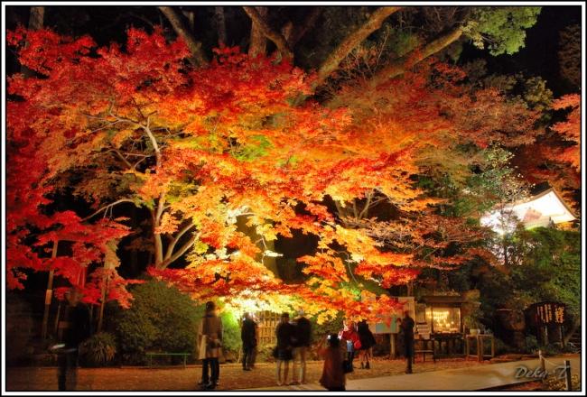 2014年11月23日大興善寺 (115)