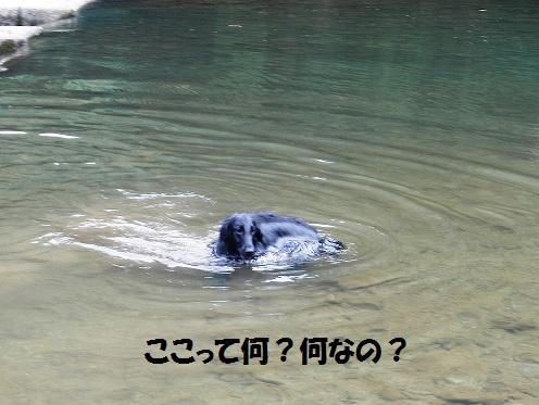 20127hatukawa1.jpg
