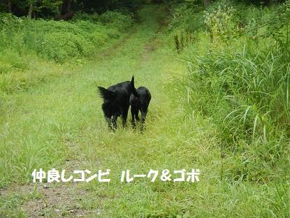 2012814nakayoshikonbi.jpg