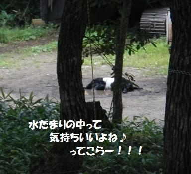 201284mizutamari.jpg