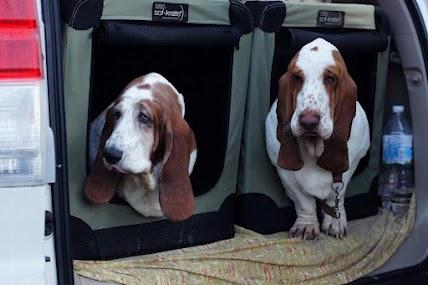 車トランク