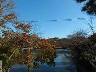 11-20鶴岡八幡宮3d