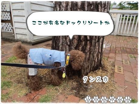 IMG_9644.jpg