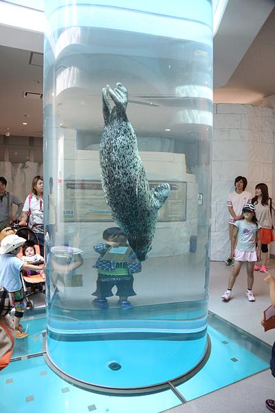 日本平動物園のアザラシ
