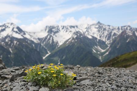 花を見てくつろぐ