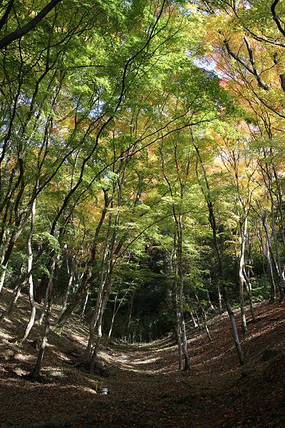香嵐渓 その5