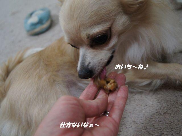 DSC02746_20120918154123.jpg