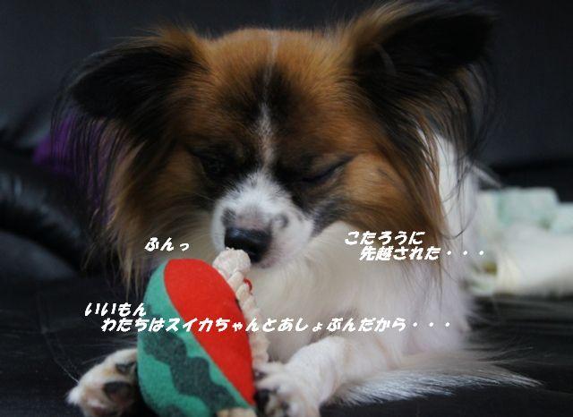 DSC03120_20120927142955.jpg