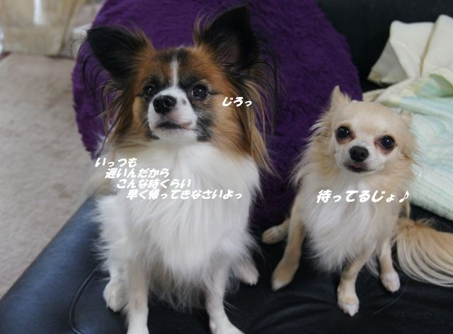 DSC04323.jpg