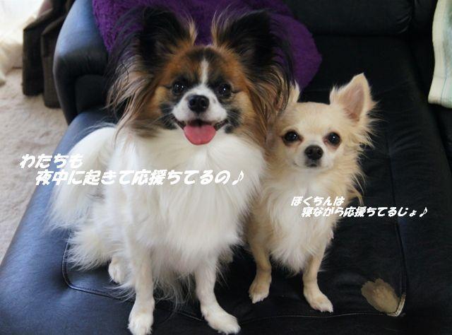 DSC06445_20120731150145.jpg