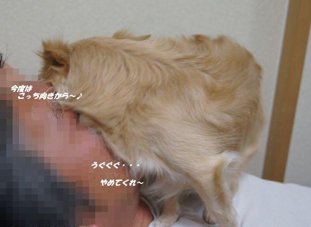 DSC07368_20120608150001.jpg