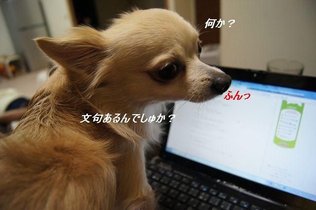 DSC084421.jpg