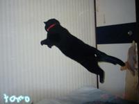 跳びます!跳びます!