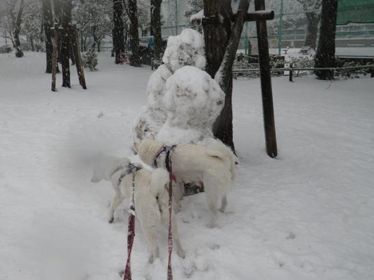 2013.1.14 もう雪だるまが…