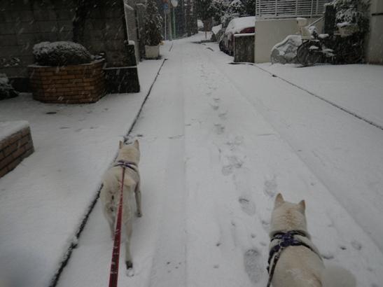 2013.1.14 お散歩開始