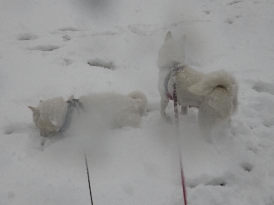 2013.1.14 雪の中でひと休み