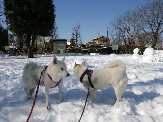 2013.1.15 いつもの公園