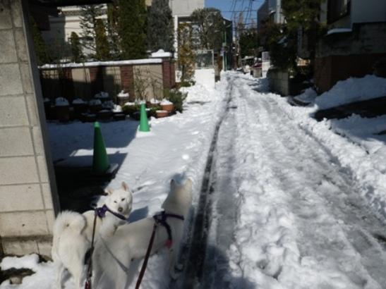 2013.1.15 今朝の雪1