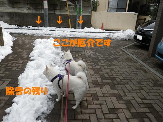 2013.1.16 朝の残雪状態