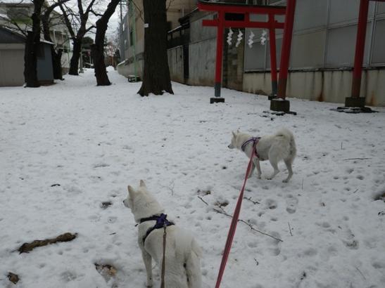 2013.1.16 神社