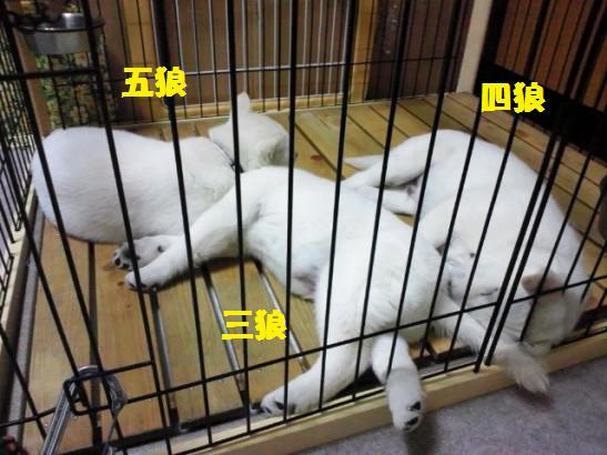 2013.1.17 三兄弟での最後の夜