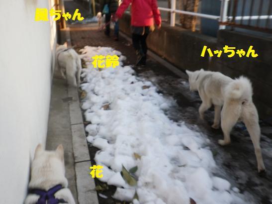 2013.1.19 お散歩
