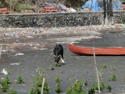 牛と鳥_convert_20120710145943