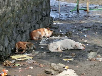 犬_convert_20120710150133
