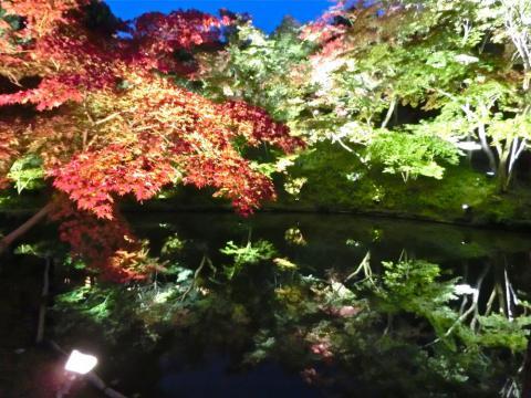 高台寺紅葉と池2