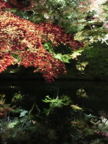 高台寺紅葉と池