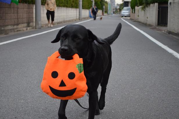 エレかぼちゃと走る
