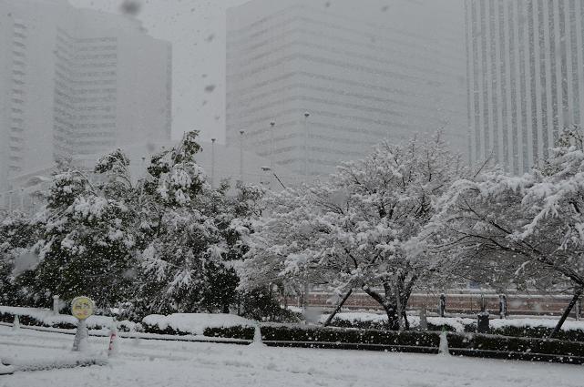 2013東京にも雪2