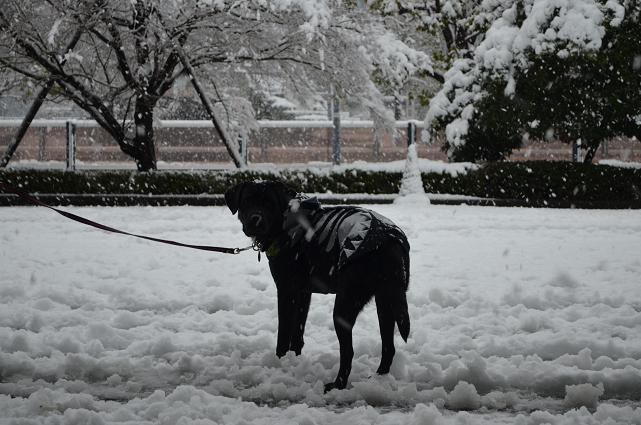 2013東京も雪?!