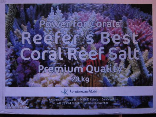korallen zucht reefers best salt