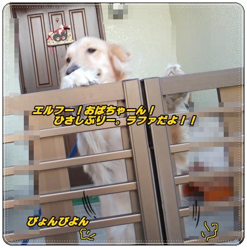 ラファちゃん1