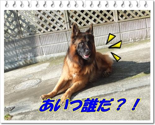 Ragちゃん1