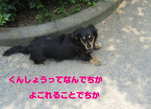IMG_3496-001.jpg