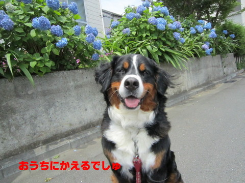 IMG_3818_1.jpg
