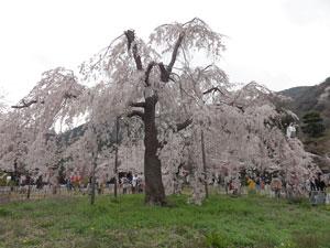 2013嵐山blog03