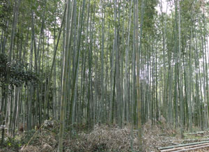 2013嵐山blog08