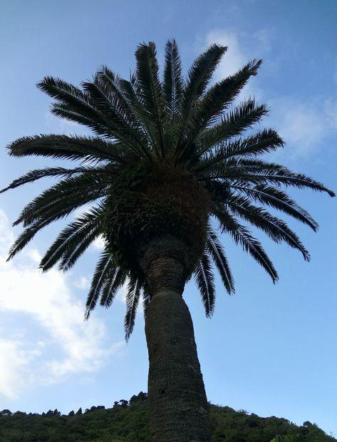 『道の駅 フェニックス』フェニックスの樹