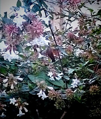 ハチ鳥_20141114