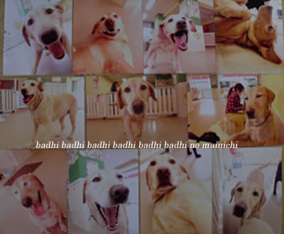 badhi2012-8-7.jpg