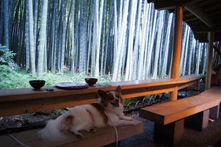 竹の庭でおくつろぎ中