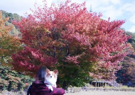 紅葉も綺麗!