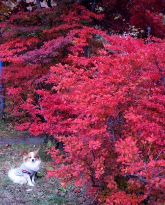 紅葉の木の横で